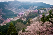 View from Yoshimizu Shrine (吉水神社), Mt. Yoshino, Yoshino, Japan
