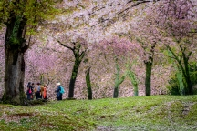 Nara Park, Nara, Japan (日本 奈良 奈良公園)