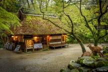 Mizutani Teahouse, Nara Park, Nara, Japan (曰本 奈良 奈良公園 水谷茶屋)