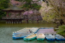 Ukimido Hall, Nara Park, Nara, Japan (日本 奈良 奈良公園 浮見堂)